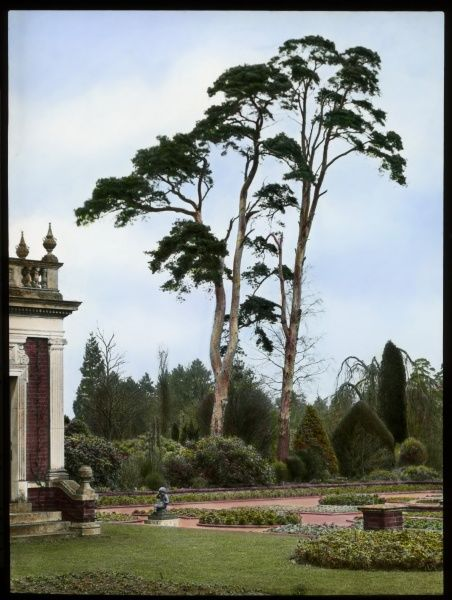 Two tall Scots Pines (Pinus Sylvestris of the Pinaceae family) at Aldenham House, near Borehamwood, Hertfordshire. Part of the gardens can also be seen, with grass, shrubs, flowerbeds, a statue, and part of the building