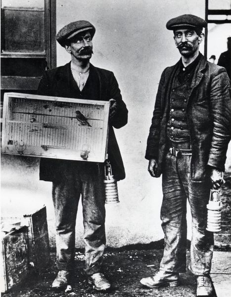 Two miners at the Universal Pit, Senghenydd Colliery, near Caerphilly, Glamorgan, South Wales, with a caged canary which was used to test the air for gas, or lack of oxygen. The men are carrying early versions of the oil safety lamp