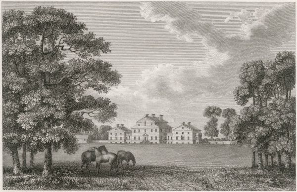 Viscount Galway's horses find a shady spot under the trees in the grounds of his residence at Serlby, Nottinghamshire