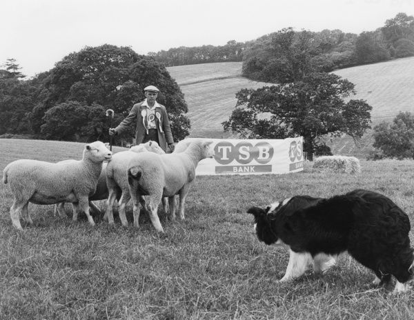 This farmer and his dog have obviously done well so far at the sheepdog trials sponsored by TSB Bank
