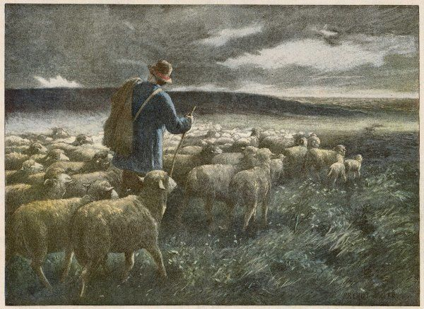 'Fleeing the storm' - a shepherd returns home with his flock before they all get soaked