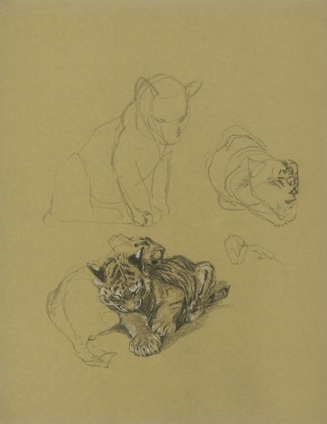 Sketches of Tiger Cubs playing
