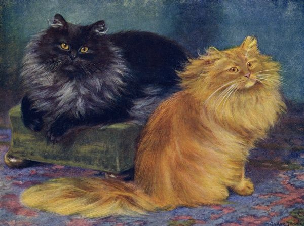 Two Persian cats, one smoke and one orange, sit together. Date: 1903