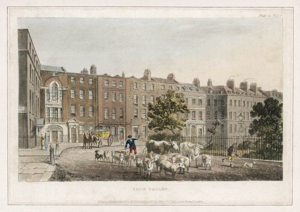 Soho Square, with cattle