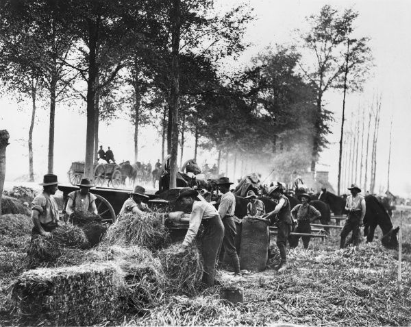 Australian soldiers cutting hay for horse fodder near Ypres on the Western Front in Belgium during World War I on 30th September 1917