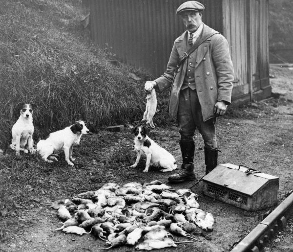 Official Rat catcher for Southern Railway with Terriers and quarry. Date: 1924