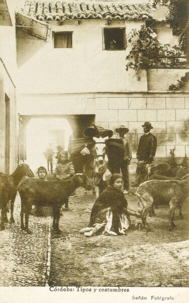 Spain - Cordoba - Local People and animals, including a fine mule with large pannier baskets secured to both flanks and a Spanish woman milking a goat into a small metals cup in the foreground