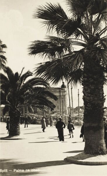 Palm Trees along the Harbour's edge at Split, Croatia
