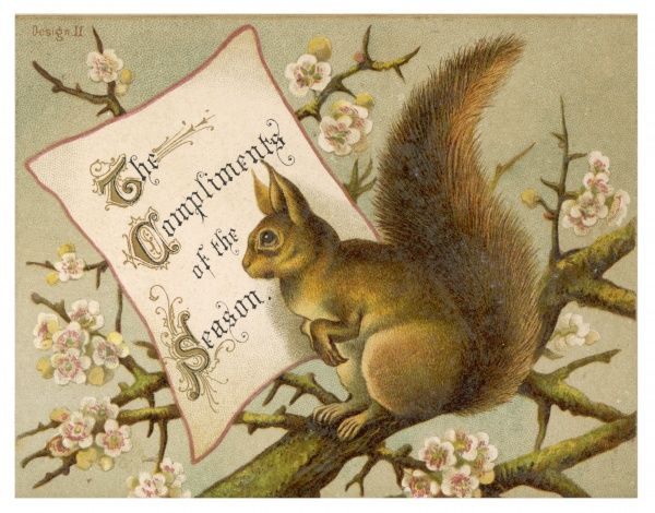 A squirrel wishes you the compliments of the season