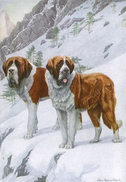 Two huge dogs, one Smooth Haired and one Rough, stand in snow on a mountain side hoping for someone to rescue, although they have no brandy. Date: 1919
