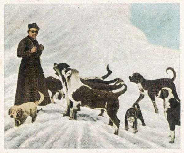 The monks of Saint Bernard, together with their dogs, visit Tibet