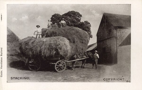 Stacking hay on a horse-drawn cart, at a farm in Rutland, England Date: circa 1910s