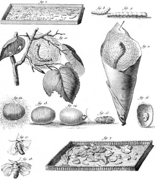 Various stages of the lifecycle of the silkworm from the grub to the silk cocoon. Date: Circa 1760