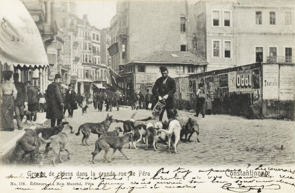 At the beginning of the 20th century there were an estimated 250 thousand dogs living on the streets of Constantinople, Turkey. These dogs were supported and fed by the population