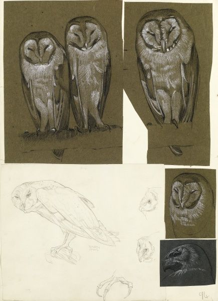Studies of barn owls, and the head of another bird of prey Date