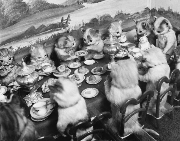 Stuffed animals sit around a tiny table eating and drinking at the Walter Potter Museum, Jamaica Inn, London, sadly sold off and disbanded in 2003. Date: 1960s