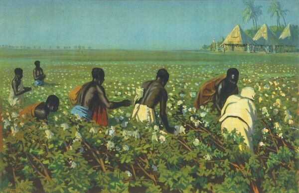 Empire Marketing Board poster showing indigeonous workers picking cotton in a field in the Sudan, while their village can be seen some way in the background