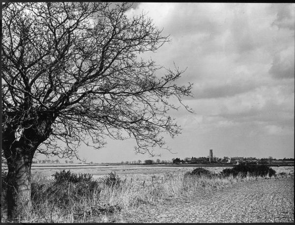A Suffolk (England) landscape, near Blythburgh, with its church tower in the distance