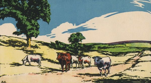 An idyllic country scene showing cattle grazing in fields during the summer months