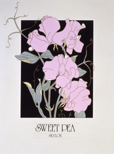 Sweet Pea Flowers (Lathyrus odoratus). Poster design by Malcolm Greensmith