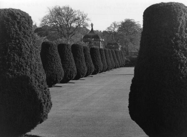 Fine topiary in the grounds of Montacute House, Somerset, England. Date: 1960s