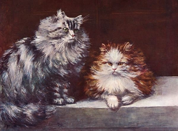 Two Persian cats, one silver tabby and one orange-and-white, sit together. Date: 1903