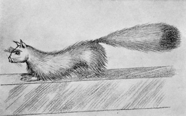 Artist's impression of 'Gef' the so-called 'talking mongoose' which befriended Voirrey Irving, a 17-year old girl from the Isle of Man