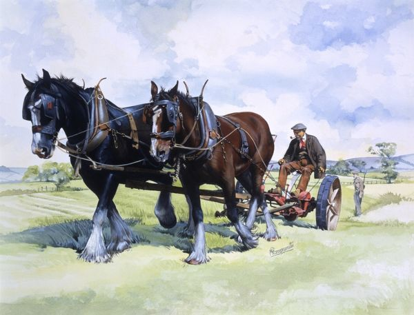 A team of working horses at work in the fields ploughing. Painting by Malcolm Greensmith Date: circa 1980
