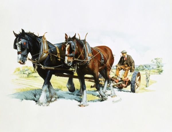 A team of working horses at work in the fields ploughing. Painting by Malcolm Greensmith