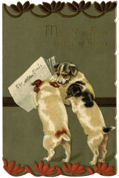 Three terriers scan the personal columns of The Times. Date: circa 1890