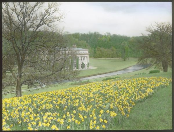 View of Tewin Water House and Tewin Water, at Digswell, Hertfordshire, with a host of golden daffodils in the foreground. The house was built in the 17th century, and the grounds and gardens were originally designed by Sir Humphrey Repton