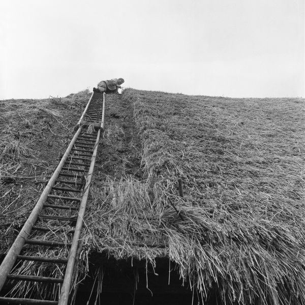 A thatcher, Sidney Shunn, at work thatching a roof at Marlborough, Wiltshire, England