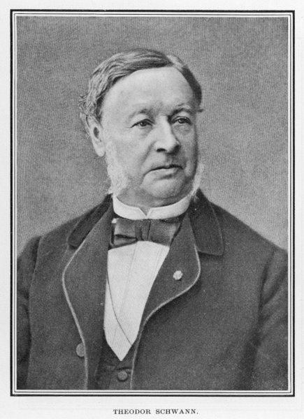 Theodor Schwann, German physiologist who made many contributions to biology and coined the term metabolism