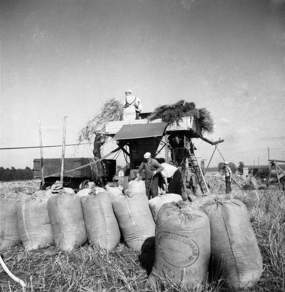 Threshing in the field, 1949. Date: 1949