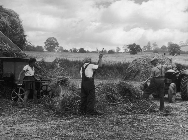 Two men and a girl in rather a short skirt, clearing away straw during the threshing on a Leicestershire farm, England