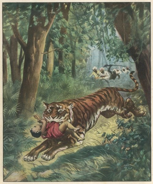 A tiger runs off with a baby in a Bengal village, but does not harm it