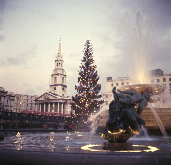 The Christmas tree in Trafalgar Square, the traditional gift of the people of Norway to the people of England after World War Two. Date: 1960s