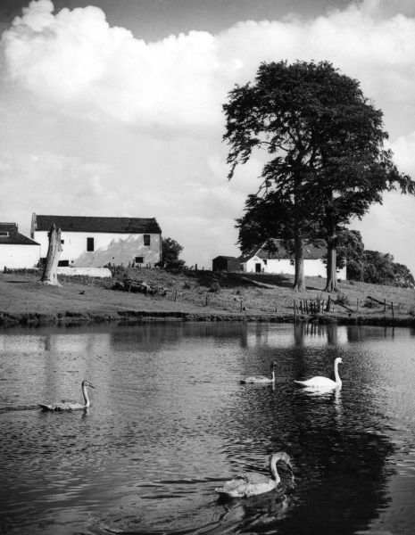 A peaceful scene near Milngavie, Scotland, within 10 miles of the industrial heart of Glasgow. Date: 1950s