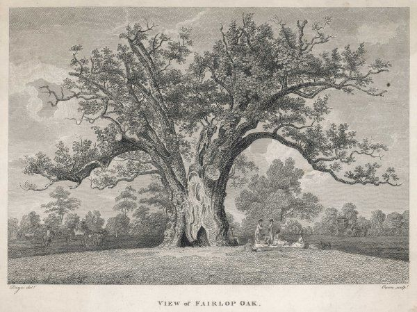 A view of the Fairlop Oak in Epping Forest