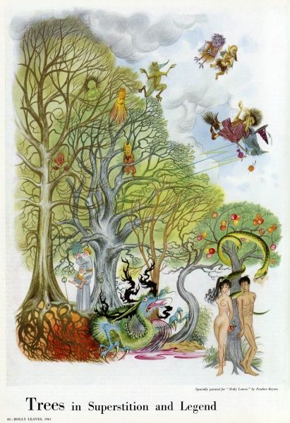 Illustration by Pauline Baynes depicting the various trees of legends and superstition