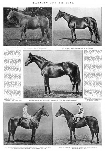 Lady James Douglas's thoroughbred racehorse, 'Gainsborough', who won the Triple Crown in 1918. Gainsborough's father was Bayardo and his mother, Rosedrop. Date: 1918