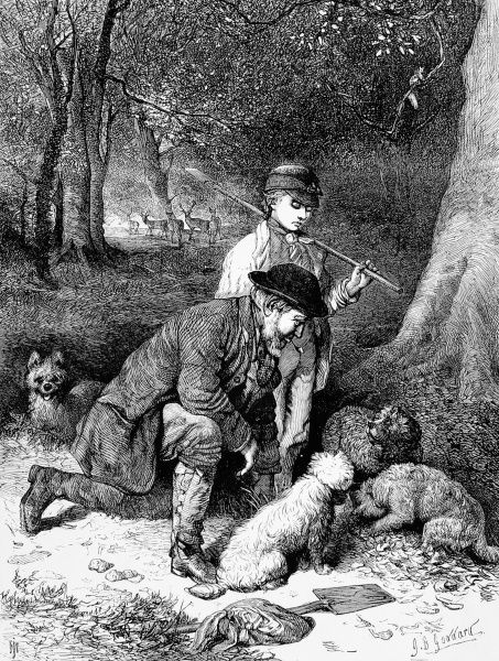 A man and boy accompanied by four small dogs, hunt for truffles in a forest. Truffles, a fungus that grows in symbiosis with certain trees, and a culinary delicacy, are notoriously difficult to find as they remain underground even when mature