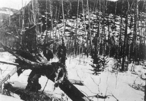 Taken in a valley, the photograph shows nearby trees still standing. However, the trees on the slope have been flattened