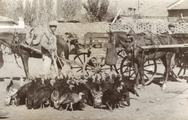 A flock of Turkeys destined for the market at Salihli, a large town and district of Manisa Province in the Aegean region of Turkey. Date: circa 1920s