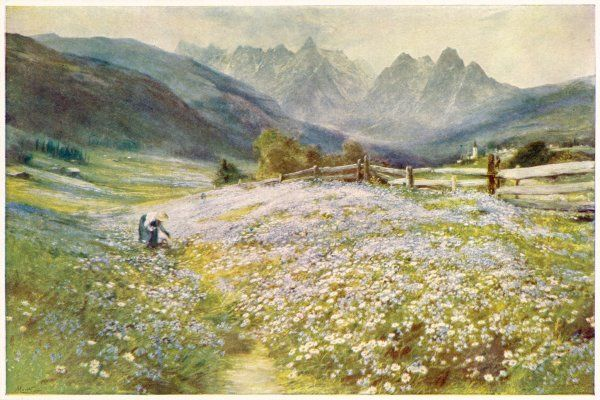 A woman picks wild flowers in June in the Austrian Tyrol