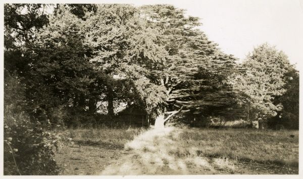 Undated photograph of wooded areas around Borley Rectory. HPG/1/3/3 (xx)