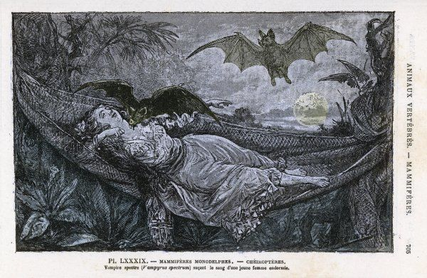 A vampire bat bites the neck of a sleeping girl in as hammock