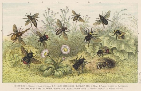 Various types of bee