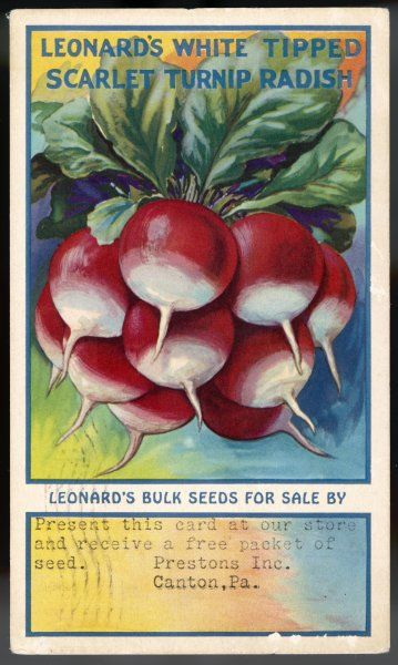 Leonard's White Tipped Scarlet Turnip Radish, 'the best stock of White Tipped Radish on the market' as developed by the Leonard Seed Company of Chicago