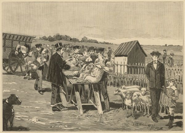 A vet inoculates sheep against 'carbunce' at Agerville, using Pasteur's method